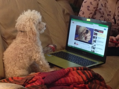Eppie is fascinated by a poodle-grooming video