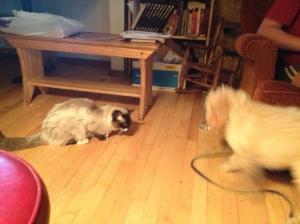 KKSP tolerates puppy play